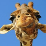 How to say No in Giraffe